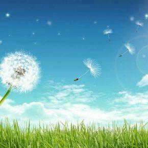 Стань вітром для кульбабки добра